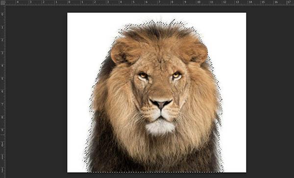 Bước 6: Khi đã làm xong các bước bạn sẽ thấy vùng chọn đã được đảo ngược và bao xung quanh hình ảnh